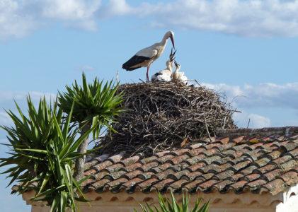 Birdwatching Center
