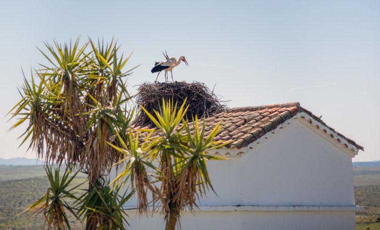Nuestras vecinas las cigüeñas